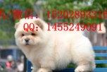 重庆哪里有松狮犬卖 重庆的松狮好多钱一只