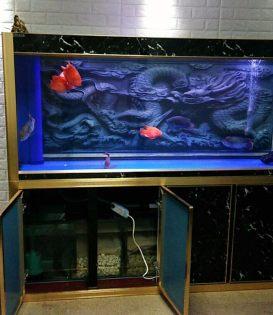 深圳专业提供上门清洗鱼缸鱼池