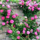 夏季鲜花养护实用攻略大全