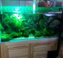 南京商务楼办公室鱼缸销售