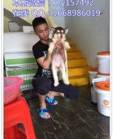 宠物领养2