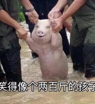 网红猪表情包