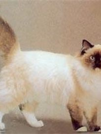 幼猫吃什么猫粮比较好 何时由幼猫粮转换为成猫粮