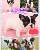 杭州宠物领养中心 杭州免费赠送宠物 杭州哪里有宠物狗卖