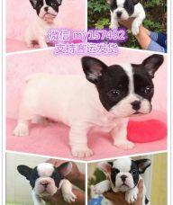 荆州宠物领养中心地址 荆州出售宠物狗 荆州犬舍排行榜