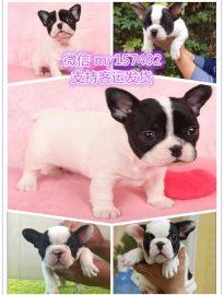 蚌埠宠物领养中心地址 蚌埠出售宠物狗 蚌埠犬舍排行榜