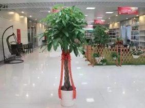 珠海租花 摆花 花卉销售 园林绿化