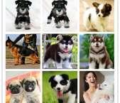 南昌宠物专卖店优惠出售宠物狗