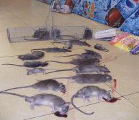 龙泉灭鼠公司  经开区灭鼠公