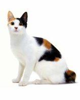 猫尾巴有什么用 猫的尾巴怎么清洗你知道吗