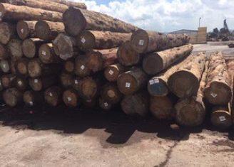 森建木业厂