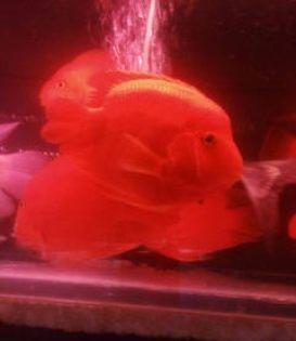 郑州专业订做鱼刚,鱼刚清洗,行业 质优价廉
