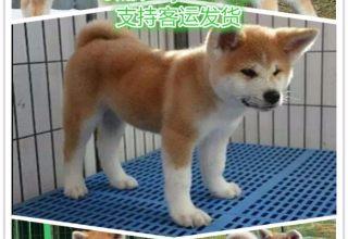 上海宠物领养中心 上海免费赠送宠物 上海哪里有宠物狗卖
