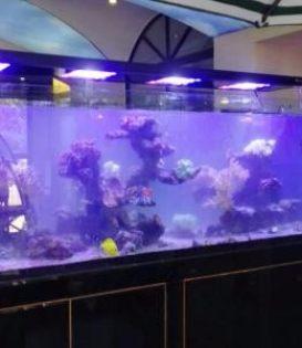 专业鱼缸造景 清洗 维护 维修 氧泵 水泵 沙石配置