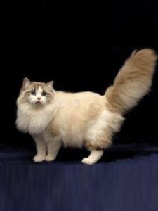 宠物猫 (19)