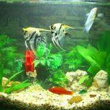 教您几个小妙招除鱼缸水垢,让鱼儿健康生长!