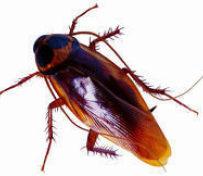 保定灭蟑螂杀虫公司