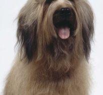 宠物狗 (18)