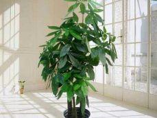 室内外绿化植物租赁花木租售、花草租摆、植物租赁