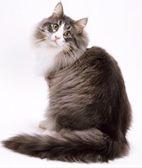猫咪血尿 选择猫粮要特别小心