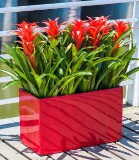 室内绿化租赁、花卉绿植布置、开业发财树
