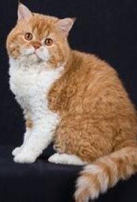 不用猫砂的猫厕所 找一个纸箱里面放入细沙