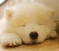 长沙官方认证狗狗领养中心 只