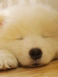 泉州什么地方有狗领养 泉州宠物赠送领养