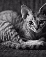 美滋元猫粮好么 要保证粮食质量