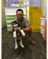 宠物领养3