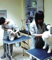 深圳龙华世纪春城夜间24小时营业急诊专业宠物医院