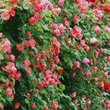 花店里各式鲜花的具体保养方法