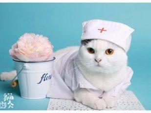 深圳动物医院救治案例