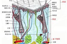 """军地注射美容培训:注射技术的核心内涵――""""三合理"""""""