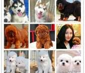 阿布宠物会所出售宠物狗价格优惠
