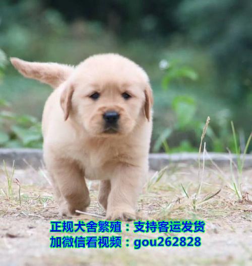 珠海哪里有便宜的狗卖