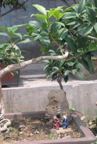 泉州晋江惠安石狮花卉租摆出租花卉租赁
