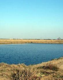 小冯渔场大片鱼塘