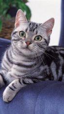 养猫好还是养狗好 仁者见仁智者见智