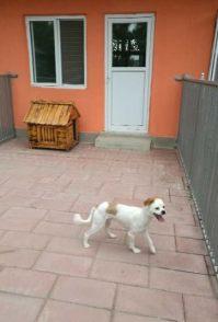 王四营家庭宠物寄养猫猫狗狗自由散养 老年宠物看护可接