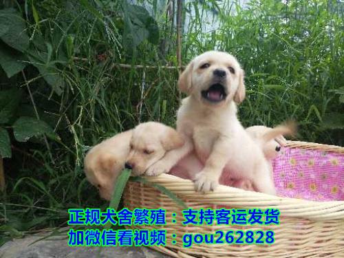 黄南关爱宠物狗