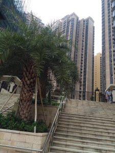 深圳村委统建楼