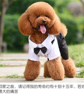 南京直销巴哥犬纯种泰迪犬斗牛 博美犬比熊犬犬柴犬包犬瘟细小