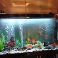 专业鱼缸过滤改造升级