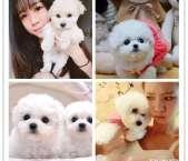 南昌本地出售世界各类名犬