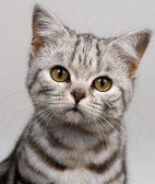 佛山宠物猫