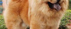 西安宠物店出售世界各类名犬