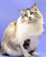 猫都能吃什么 很多主人喂养猫咪吃猫粮