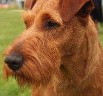 宠物狗 (11)