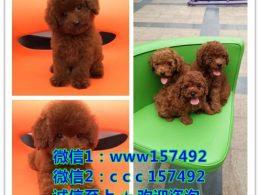 南京正规犬舍 如果你真的爱狗 想养条好狗 请进来看看